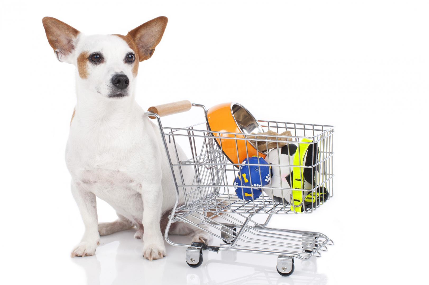 Магазин с животными в картинках