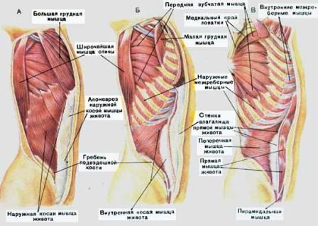 Мышцы приводящие движение атланто-затылочный сустав соли в суставах шеи