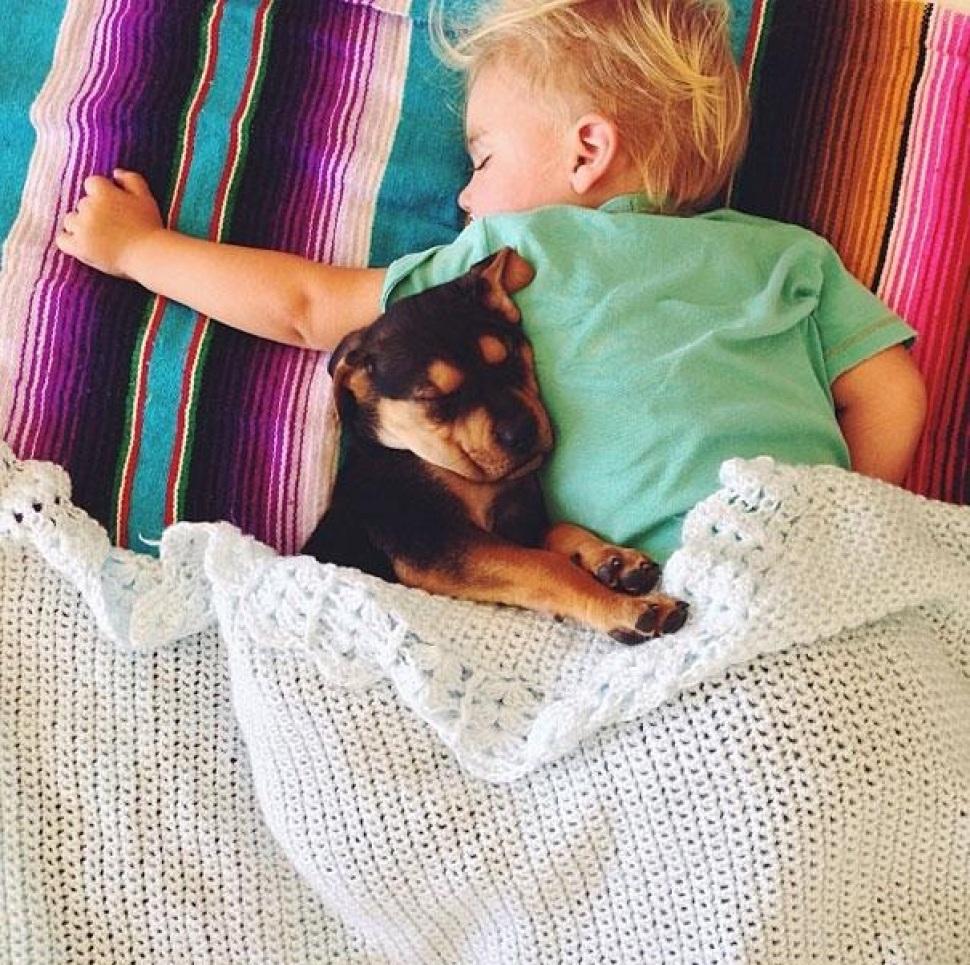 Выбираем вместе с ребенком щенка