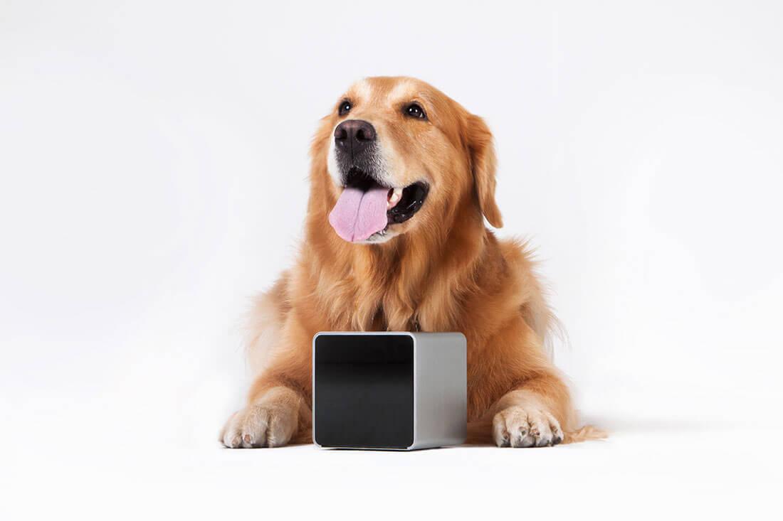 Оригинальная игрушка для собаки