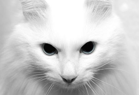 Ветеринарная клиника кошек и собак