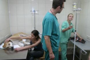 Ставропольская краевая клиническая больница мрт