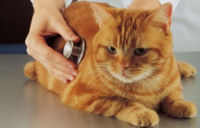 ветеринарный врач лаборант вакансии